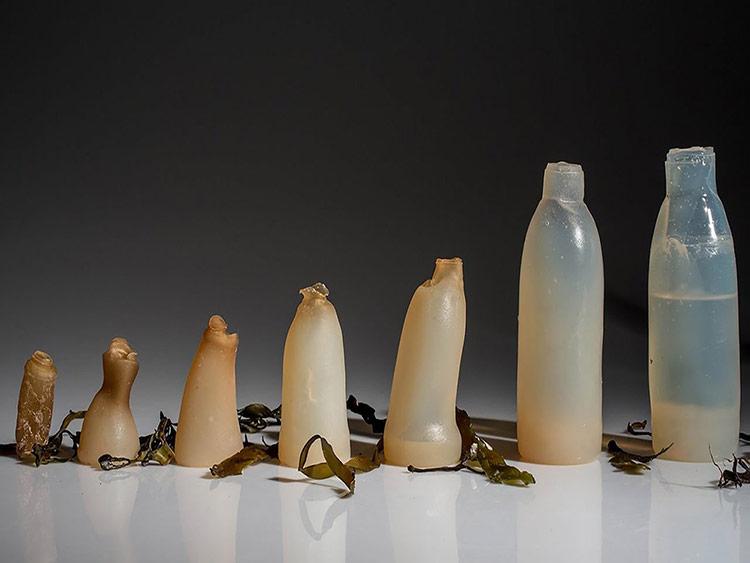 Thiết kế bao bì không Plastic
